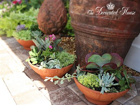 Dish Garden by The Decorated House How To Create A Succulent Dish