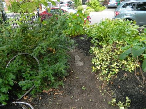 fall garden cleanup 17 best images about gardening services on