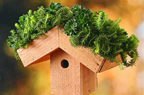 live roof birdhouse green roof diy birdhouse backyard projects birds and