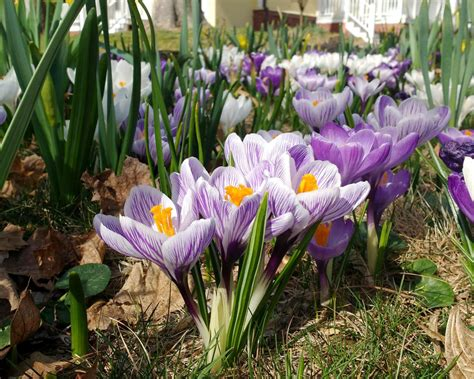 ready for spring six ways to get your garden ready for spring diy network