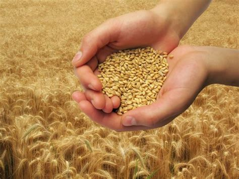 whole grains disease whole grain foods can cut disease risk