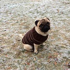pug coat pattern 1000 images about maglia e uncinetto animali knit and crochet pets on