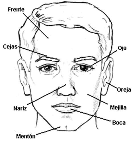 imagenes artisticas cuerpo humano el cuerpo humano y sus partes