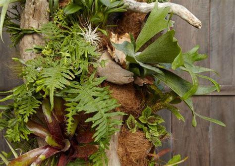 Flora Grubb Gardens by Flora Grubb Gardens Cact 233 Es Succulentes Et Epiphites