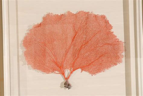 sea fan shadow set of 9 red coral sea fans framed in shadow boxes at 1stdibs