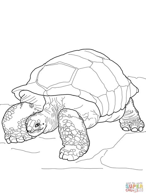 giant tortoise coloring page coloring pages