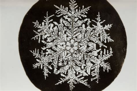 snowflake wilson bentley the pioneering snowflake photographs of a young obsessive