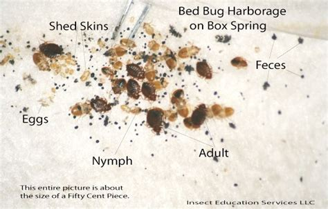 do bug bombs kill bed bugs do bug bombs kill bed bugs toronto on bedbug control so