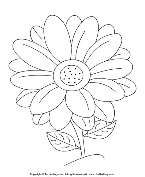 free coloring pages daisy flower daisy coloring sheet turtle diary