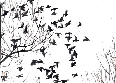 White Bird Black Bird a journey with iqbal black white birds