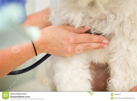 dogs rate rate royalty free stock photo image 15836045