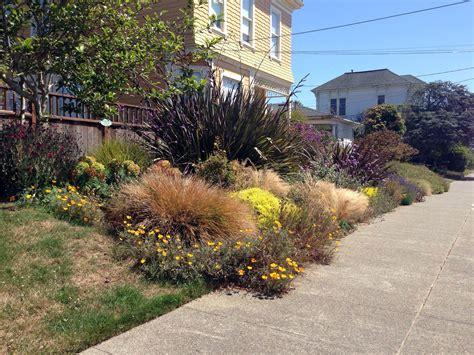 the no water california garden garden rant