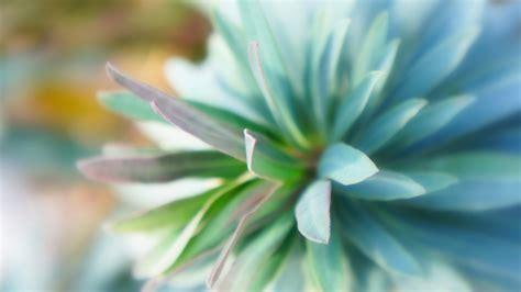 wallpaper teal flower teal dahlia wallpaper 702490
