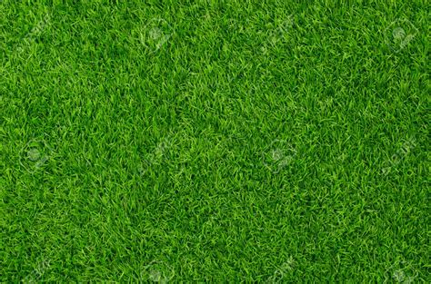 Grass Top by Grass Top View Images Search