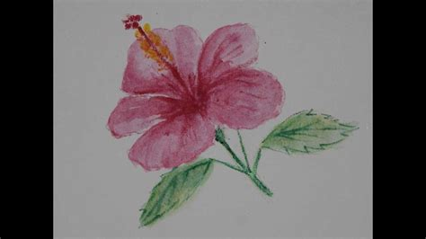 menggambar bunga kembang sepatu  pensil warna