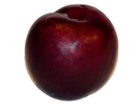 fit beauty and you the venerable plum