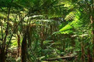 Animals And Plants In Tropical Rainforest - rainforest layers discover the layers of a rainforest