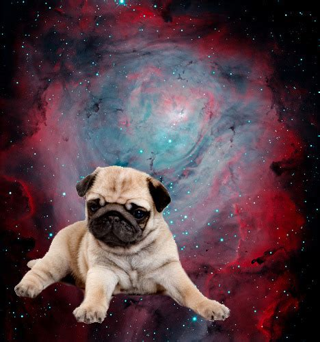 puppies in space yeah dogs in space