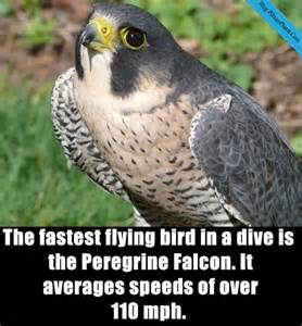 27 interesting facts about birds you may know page 5