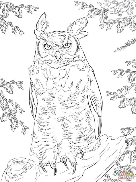 realistic owl coloring page realistic great horned owl coloring page free printable