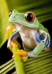 animals and plants that live in the tropical rainforest hibians used water process earth