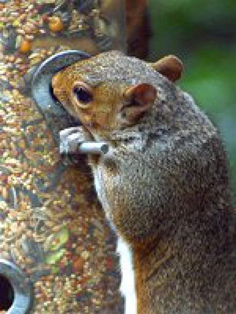 best squirrel proof bird feeders seed
