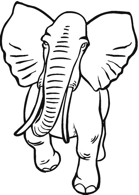 elephant trunk coloring page free coloring pages of elephant trunk