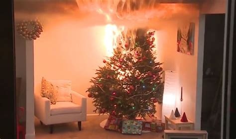 stop and shop xmas trees tree warning how to stop your tree going up in flames this year express co uk