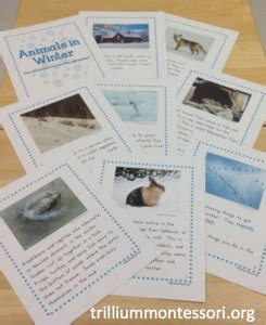 trillium report card templates animals in winter unit fiction cards and winter
