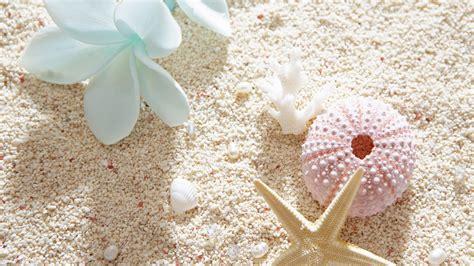 wallpaper kerang bintang laut hd hintergrundbilder sand seestern blumen muscheln