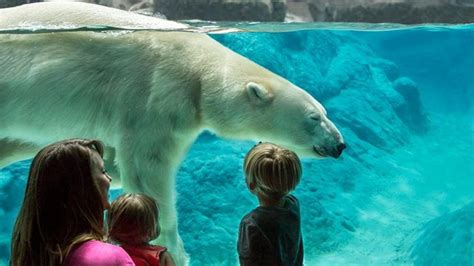 Wild Nature Sweepstakes - unleash your wild side with the north carolina zoo just for you sweepstakes by feb 29