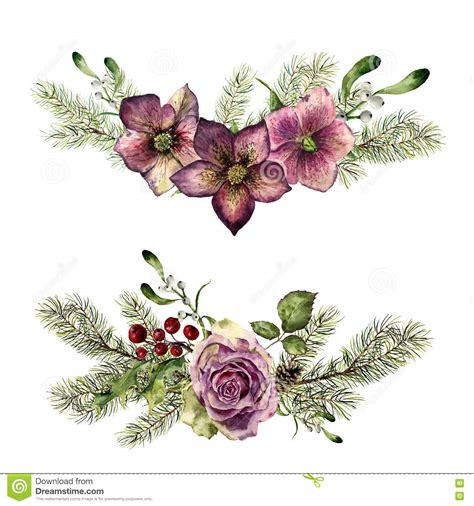 watercolor winter floral elements with fir isolated on