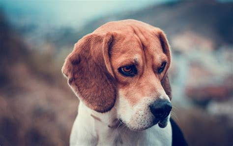 amazing free dog wallpapers to download graphicmania download free windows 10 themes wallpapers and news