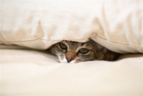 Cat Hiding Bed by Catssick