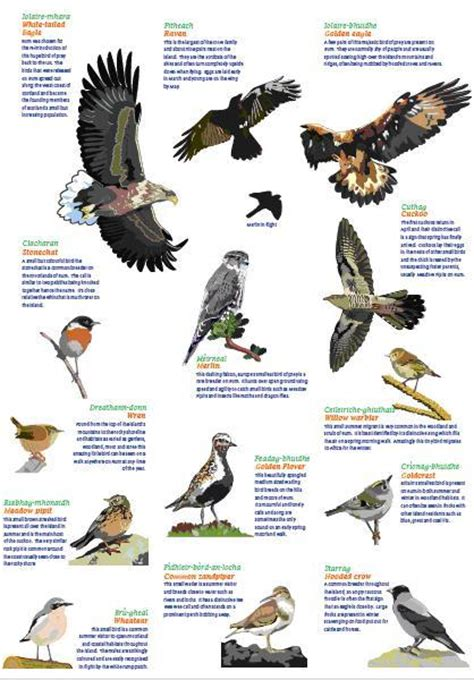 cafechoo image list of bird species