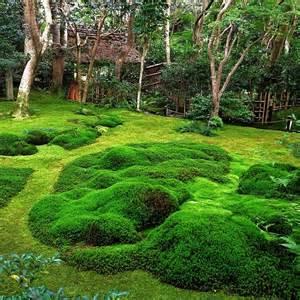 jardin de mousse 224 kyoto japon 365