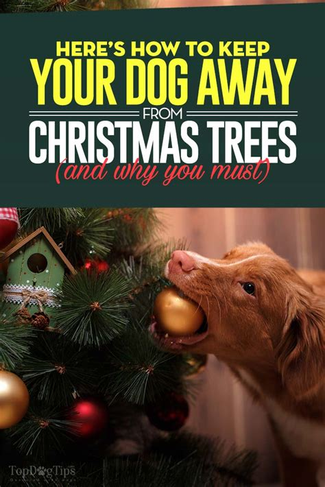 how to keep away from tree this season