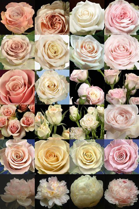 rose themed names floral verde llc board 7 vintage hollywood in pink and