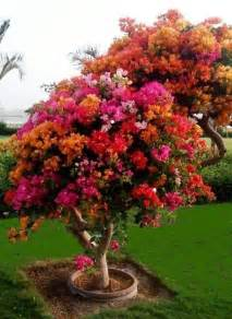 best 25 flower tree ideas on pinterest wisteria tree flowering trees and pink flowering trees