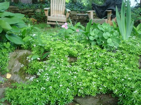 ground cover yard ideas