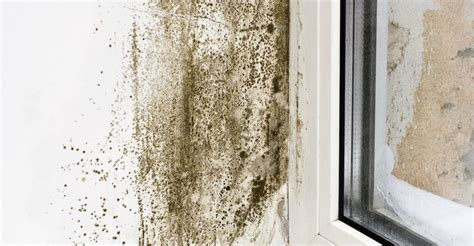 Basement Waterproofing Ny by 5 Things To Help You Deal With Mold And Mildew In New Haven Ct