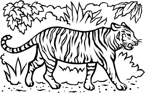 Free Coloring Pages Of Sumatran Tiger Tiger Coloring Book Pages