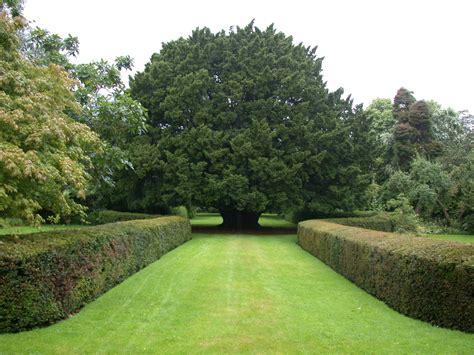 yew hedge botanics stories