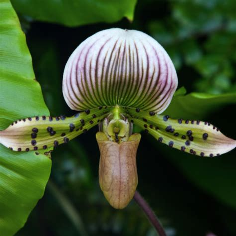 orchids facts 100 facts about orchids interesting facts about