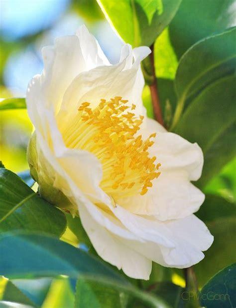 emily porter plants 1000 images about flowers on pinterest shrubs