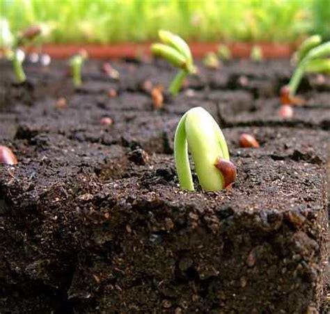 vegetable garden clay soil preparing soil for vegetable garden planting