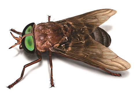 horse flies in house pin it like visit site