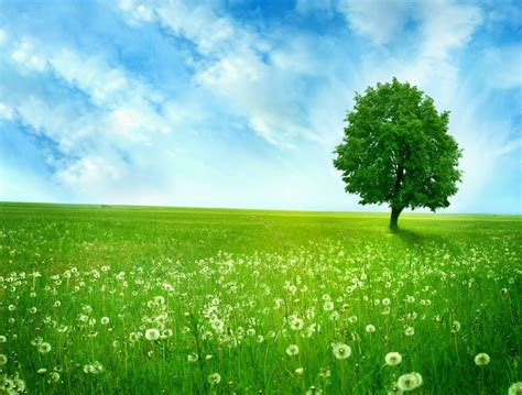 green field  greenlands silent tree dandelions phone wallpapers
