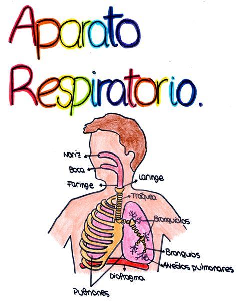 imagenes del sistema digestivo dibujo imagenes del sistema respiratorio para colorear photos