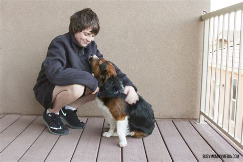 Canine Emotional Detox by How To Detox Your Pet S Diet